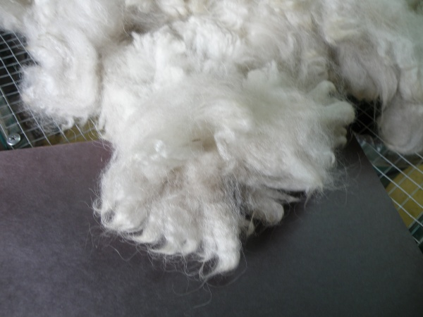 Sorting and Grading Alpaca Fiber